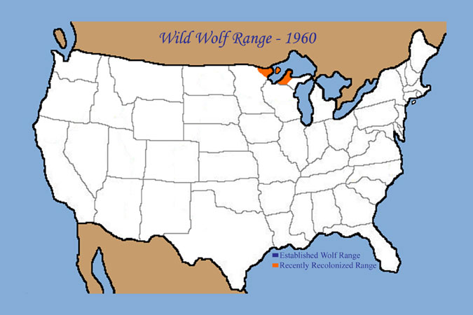 GrayWolfConservationcom Wolf History In US - Maps of the location of wolves in the us