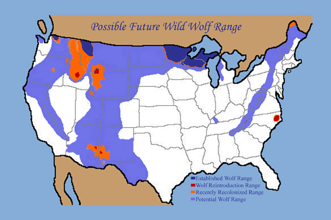 Graywolfconservation Com Wolf History In U S